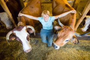 Ferme du chene, bauges, fromage, yaourts, le noyer, lait de vache, produits laitiers, fermiers